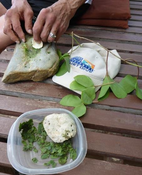 "ALT =[""Dr. Jolie Bookspan teaches how to use goatfoot creeper to make a jelllyfish sting remedy #wild foraging - http://drbookspan.com/DivingAerospace]"