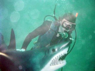 "ALT =[""Dr. Jolie Bookspan: Dr. Bookspan scuba diving with a funny shark""]"